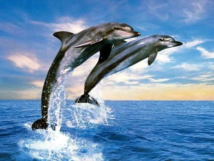 δελφινι1