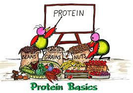 proteini1
