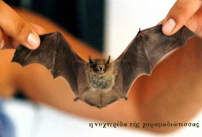 νυχτερίδα 2