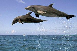 delfinia8.thumbnail