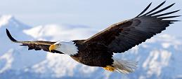 αετός εξώφυλλο