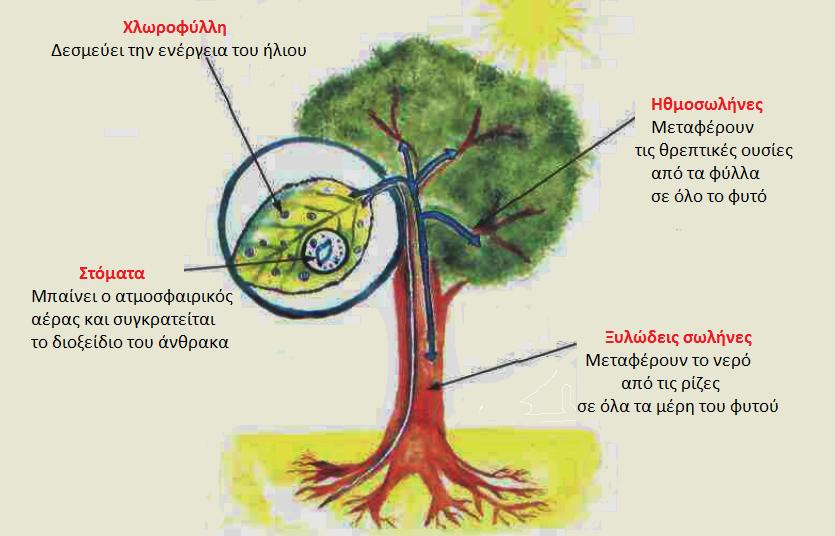 Τι είναι ο δακτύλιος δέντρου που χρησιμοποιείται για