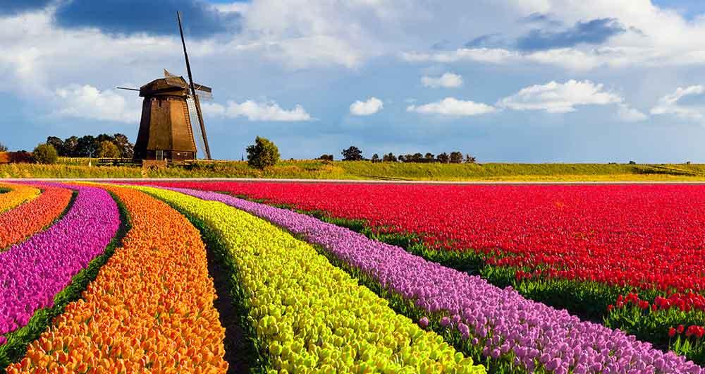 1000x530_holland_tulips_lgi-505129376_tulips
