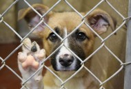 myths-about-rescue-dogs