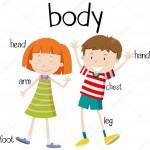 depositphotos_101998552-stock-illustration-human-body-parts-diagram