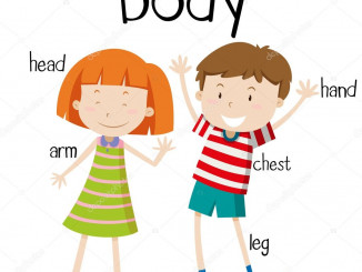 depositphotos_101998552-stock-illustration-human-body-parts-diagram