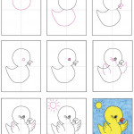 Baby-Chick-diagram
